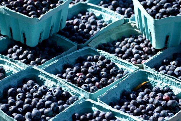 Borówki 2021 - jakie ceny pierwszych owoców w hurcie?