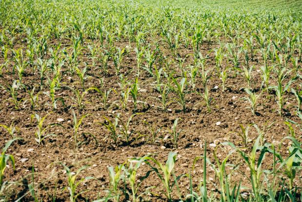 Osady ściekowe można zamienić w organiczny nawóz