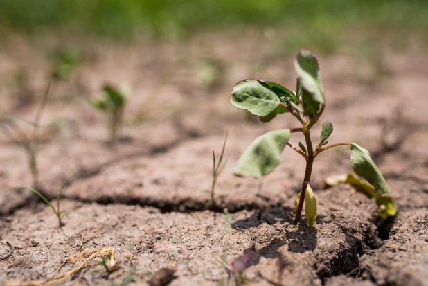 Susza a uprawy ogrodnicze - gdzie największe niedobory wody?