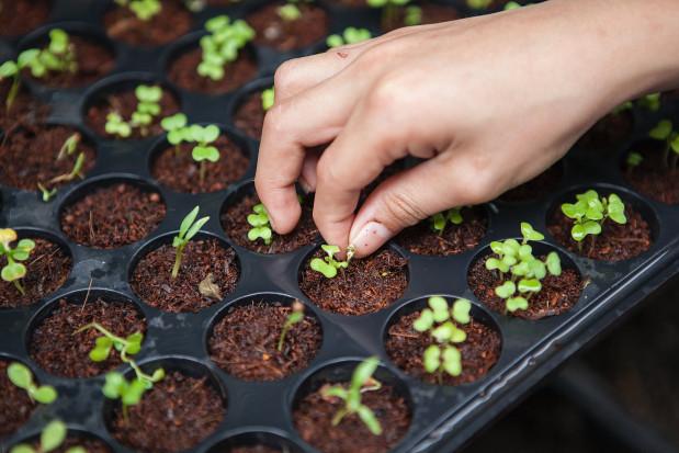 Opłata od wartości pestycydów na dofinansowanie eko-rolnictwa?
