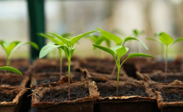 Bionawozy szansą na poprawę jakości plonów i żyzności gleby
