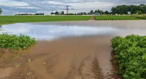 Lubelskie: Ulewne deszcze zalały plantacje malin