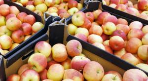 Ceny jabłek na sortowanie niskie, korzystniej wysypać owoce na przemysł?