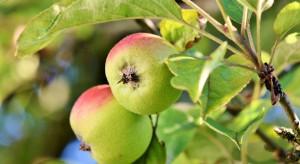 UPL stawia na biorozwiązania. Uruchamia Natural Plant Protection