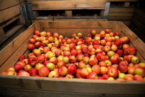 Jakie zapasy jabłek w polskich chłodniach w czerwcu? Raport WAPA