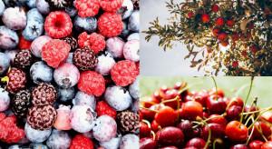 Międzynarodowy Dzień Owoców. Jakie wyzwania przed ogrodnikami?