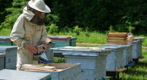 ARiMR: Więcej czasu na wnioski o refundację kosztów dla pszczelarzy