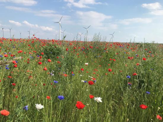 Bayer uruchamia program dekarbonizacji rolnictwa w Europie