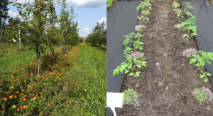 Nowy projekt Instytutu Ogrodnictwa - BioHortiTech już w realizacji