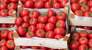 Mazowieckie: Ukradł 600 kg pomidorów. Został zatrzymany