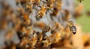 Węgry: minister rolnictwa pokazał pszczelą rodzinę na balkonie resortu