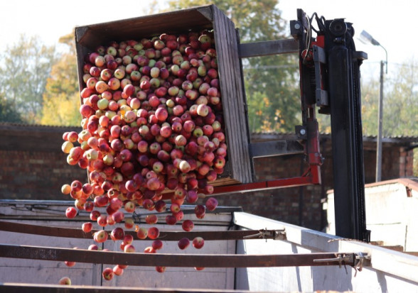 Ceny jabłek przemysłowych w rejonie wareckim na poziomie 40 gr/kg