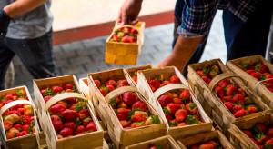 Niewielki spadek cen truskawek deserowych w lipcu