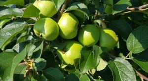 Szkodniki jabłoni - jakie zagrożenie w lipcu?