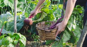 Resort rolnictwa ma plan na wzrost produkcji ekologicznej w Polsce