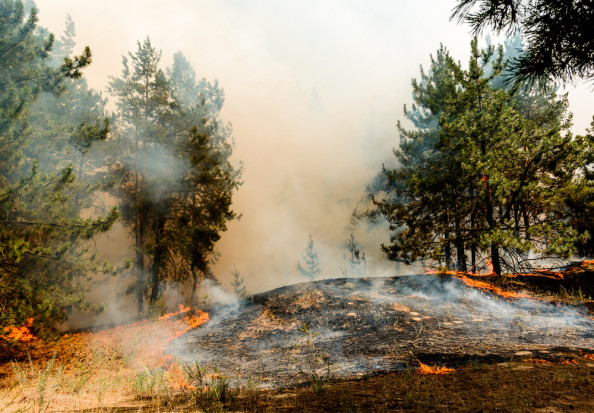 Straż Pożarna: fala upałów spowoduje wzrost zagrożenia pożarowego w lasach