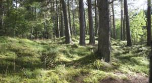 Rząd chce ułatwić pozyskiwanie gruntów leśnych pod inwestycje energetyczne