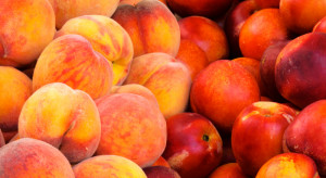 Rekordowy spadek produkcji brzoskwiń i nektaryn w Unii Europejskiej