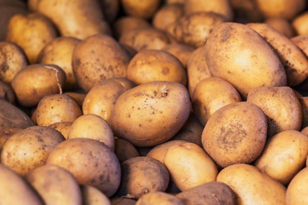 Francja: Zbiory ziemniaków najwyższe od 30 lat