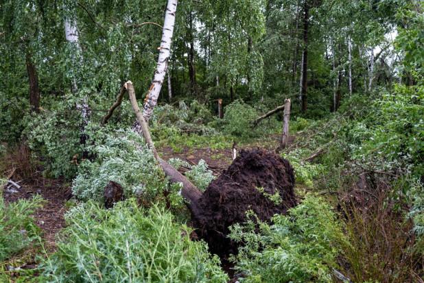 Pogoda na 15 lipca: gwałtowne burze, gradobicia, trąby powietrzne