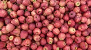 W ciągu pół roku ceny jabłek w Europie spadły o ponad 60 proc.