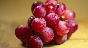 Japonia: 50 tys. zł za kiść winogron wielkości piłeczek pingpongowych