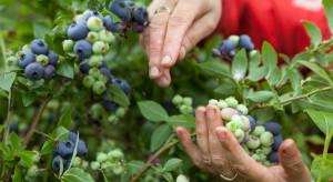 Łódzkie: Brakuje chętnych do pracy przy zbiorach owoców i warzyw