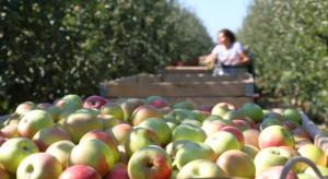 Holenderscy sadownicy już szukają pracowników do zbiorów jabłek