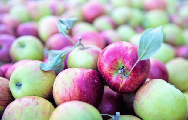 Ukraińscy sadownicy rozpoczęli sprzedaż wczesnych odmian jabłek