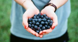 Zbiór owoców wśród najlepszych prac sezonowych. Ile można zarobić?