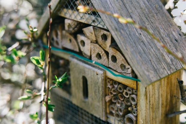 Pszczoły i zapylacze zagrożone na całym świecie