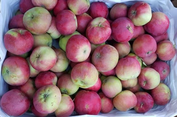 Rynek Bronisze: Jabłka Genewa po 40 zł za skrzynkę