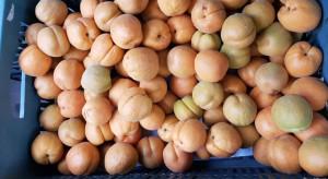 Coraz więcej importowanych moreli sprzedawanych jako polskie