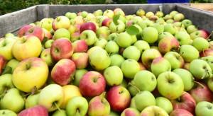 """Mazowieckie: Pierwsze oferty kupna jabłka z """"przerywki"""""""