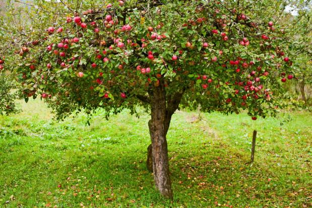 Warszawa: zbiór owoców wywołał konflikt. Pojawiły się groźby policją