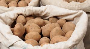 Holandia: Celnicy przechwycili kokainę w workach z ziemniakami