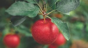 Jakie szanse i zagrożenia dla sektora sadowniczego?