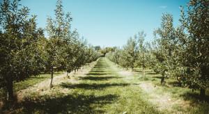 W Tychach powstanie ogólnodostępny miejski sad owocowy