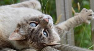 Kanada: Aplikacja pomoże stwierdzić, czy kot czuje się dobrze