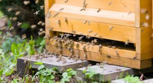 W leśnej pasiece w Bedlenkach wytruto pszczoły