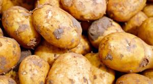 Młode ziemniaki najpopularniejszym warzywem w lipcu