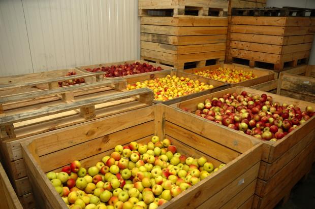 WAPA: W polskich chłodniach jest jeszcze 133 tysiące ton jabłek!