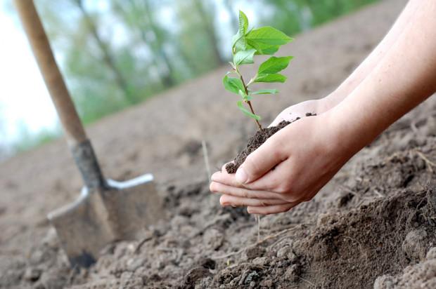 ARiMR: Ostatni dzień na złożenie wniosku na zalesianie