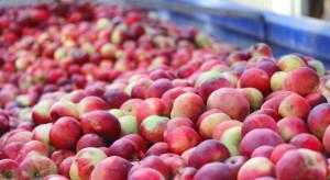 Mało jabłek z przerywki w skupach. Jakie ceny za przemysł?
