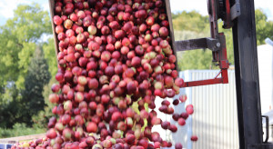 Przetwórnie podały ceny minimalne jabłek przemysłowych 2021
