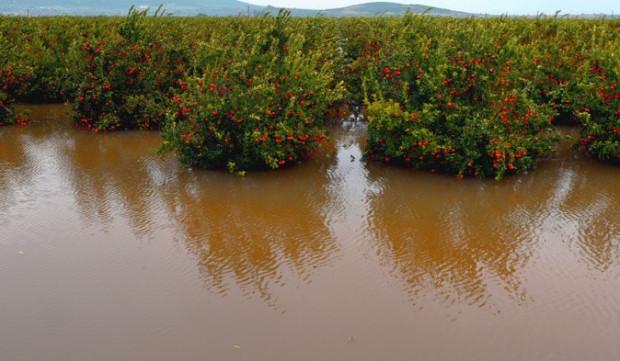 Lipcowe powodzie w Europie zniszczyły sady i plantacje owoców