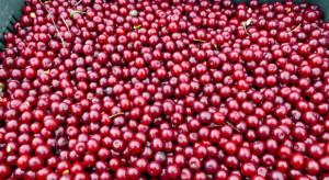 LIR o niskich cenach wiśni: rynek przetwórczy jest zmonopolizowany!