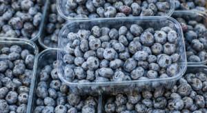 Borówki - ulubionym owocem dietetyków