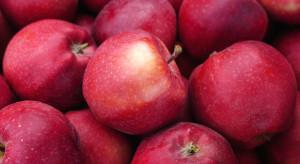Rosja zezwoliła na import jabłek z ośmiu azerbejdżańskich przedsiębiorstw