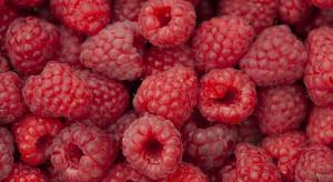 Maliny w skupach - analiza cen owoców